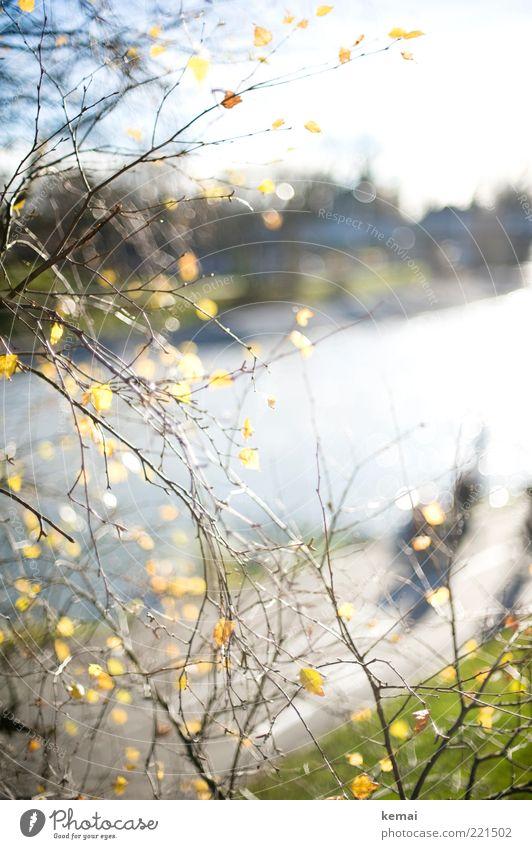An der Donau (LT Ulm 14.11.10) Umwelt Natur Landschaft Pflanze Wasser Sonne Sonnenlicht Herbst Klima Schönes Wetter Blatt Grünpflanze Wildpflanze Park Fluss