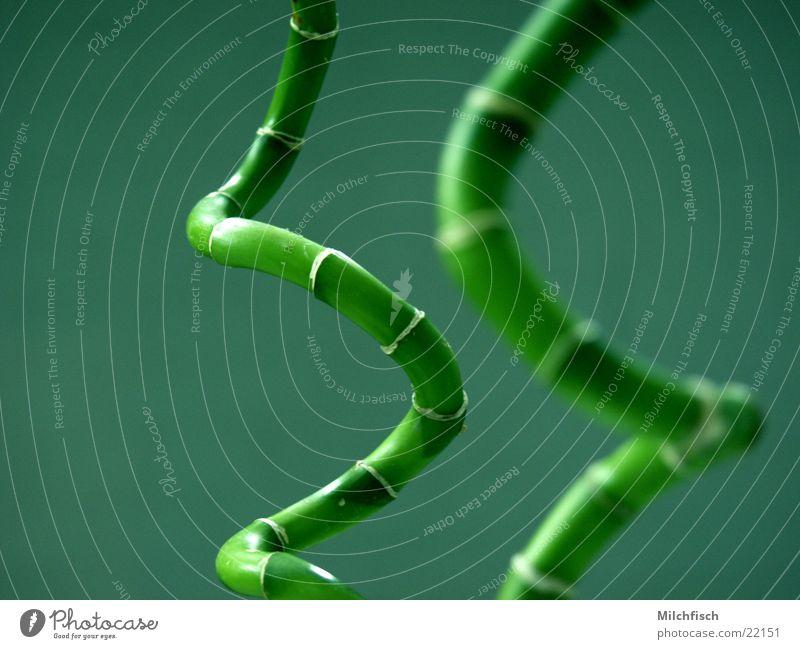 Bambus China grün Spirale Pflanze abstrakt Bambusrohr tiefenunschärfe Raum