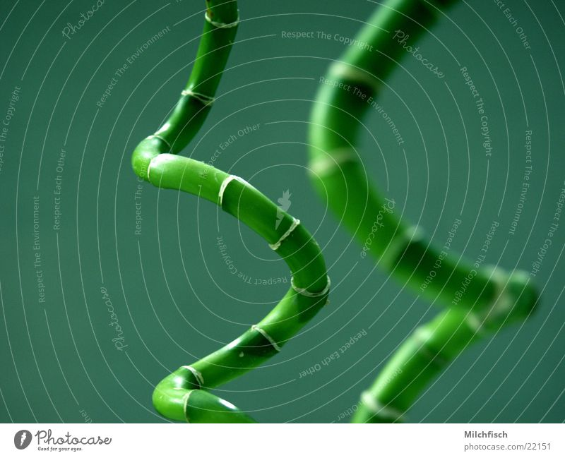 Bambus grün Pflanze Raum China Spirale Bambusrohr