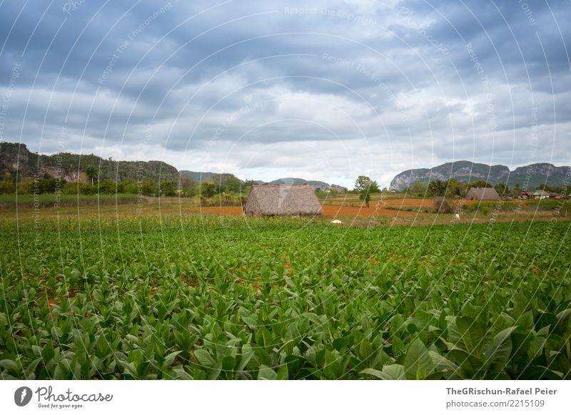 Vinales (Kuba) Umwelt Natur Landschaft blau grau grün Wolken Hütte Tabak Tabakfeld Valle de Viñales Felsen Reisefotografie Stimmung Feld Farbfoto Außenaufnahme