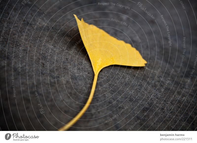 vergiss mein nicht...mal anders Natur Blatt gelb Herbst gold unten vertrocknet Herbstlaub