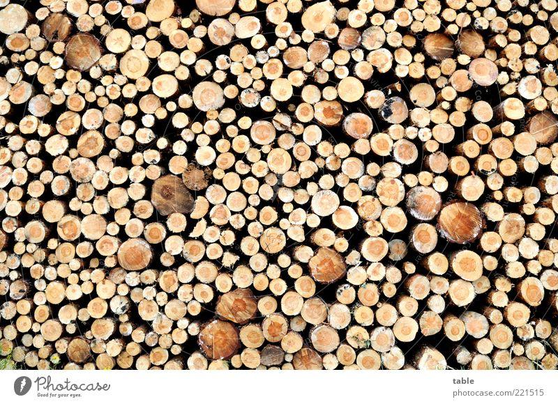 vor der Hütte Natur Pflanze Holz Umwelt Ordnung rund Wandel & Veränderung liegen dünn Vergänglichkeit natürlich dick viele Baumstamm Stapel durcheinander