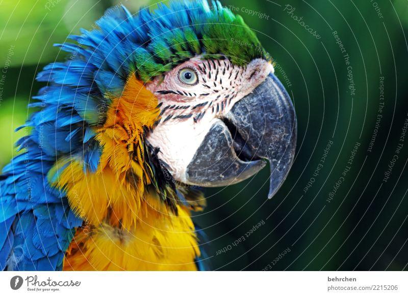 vom winde verweht Ferien & Urlaub & Reisen Tourismus Ausflug Abenteuer Ferne Freiheit Safari Natur Tier Wildtier Vogel Tiergesicht Flügel Zoo Papageienvogel Ara