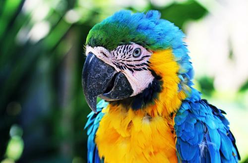 paradiesvogel Ferien & Urlaub & Reisen blau schön Tier Ferne gelb Auge außergewöhnlich Tourismus Freiheit Vogel Ausflug Feder Abenteuer fantastisch Flügel