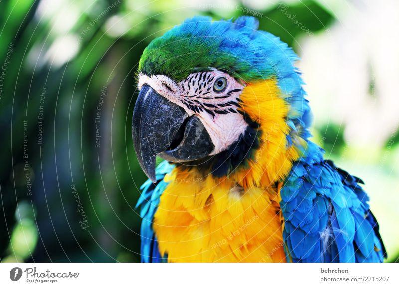 paradiesvogel Ferien & Urlaub & Reisen Tourismus Ausflug Abenteuer Ferne Freiheit Vogel Tiergesicht Flügel Zoo Papageienvogel Ara Feder 1 außergewöhnlich