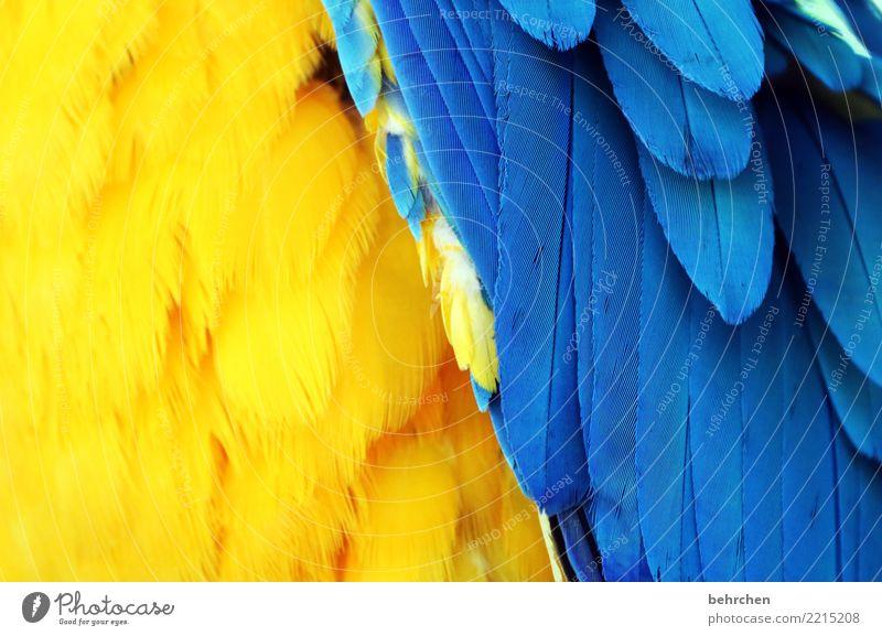 federkleid Ferien & Urlaub & Reisen blau schön Tier Ferne gelb außergewöhnlich Tourismus Freiheit Vogel Ausflug Wildtier Feder Abenteuer Flügel exotisch