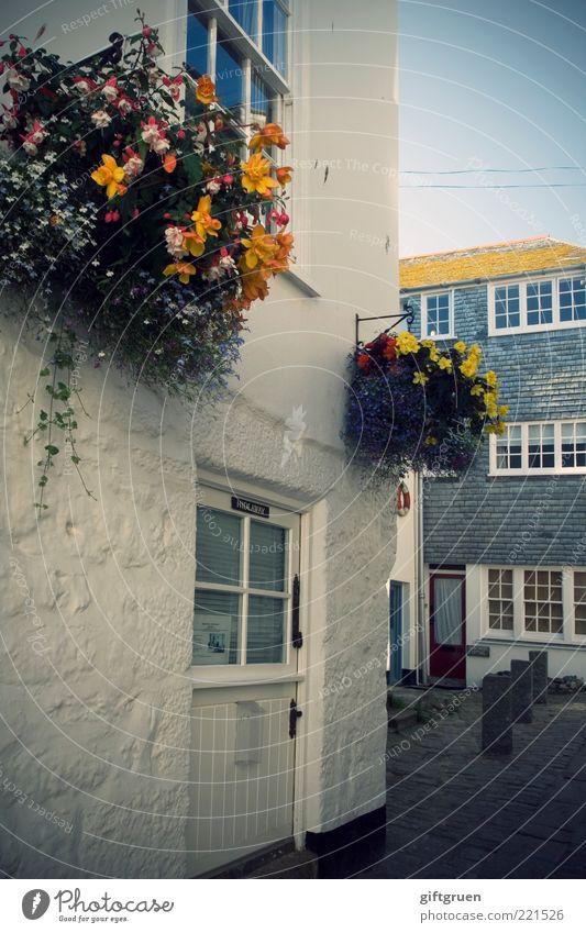 spic 'n span alt Blume Haus Straße Wand Fenster Mauer Wege & Pfade Gebäude Architektur Tür Fassade Dach Dekoration & Verzierung Sauberkeit Dorf