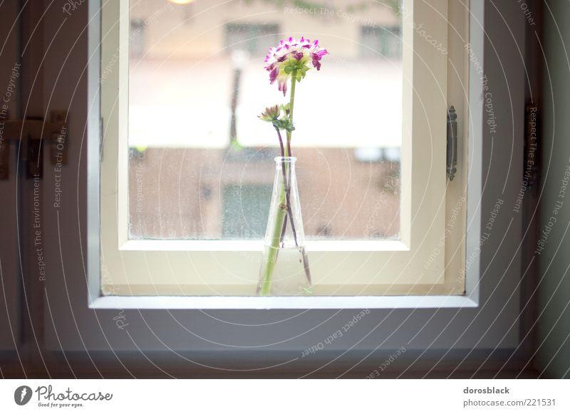 vitrine. einrichten Fensterbrett Blume ästhetisch Duft elegant Hoffnung harmonisch Vase Farbfoto Gedeckte Farben Innenaufnahme Menschenleer Tag Licht