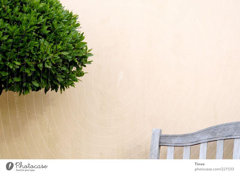 ein Plätzchen für die Mußestunde Baum grün Pflanze Wand Holz Mauer Terrasse Möbel Sitzgelegenheit kahl übersichtlich Licht Anschnitt Grünpflanze buschig Textfreiraum oben