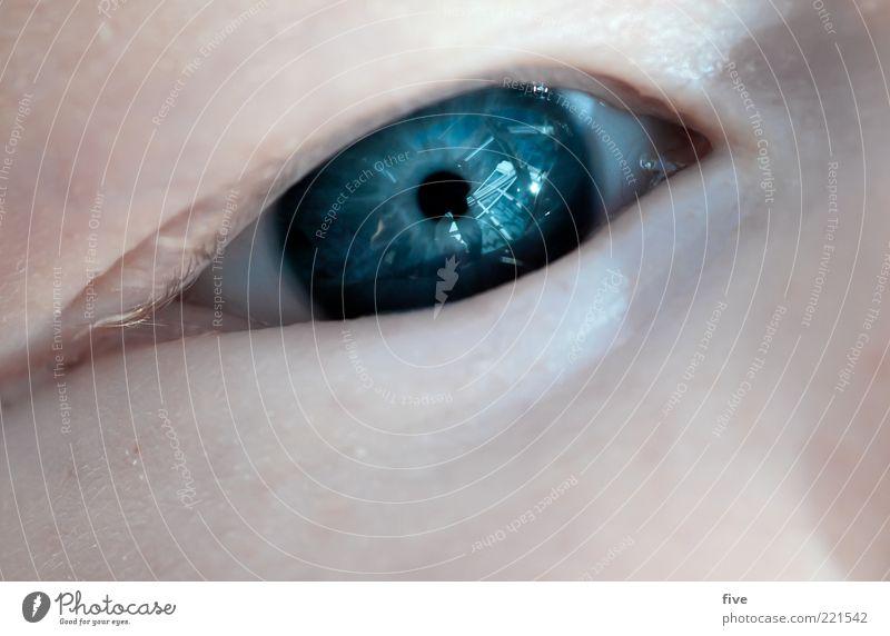 erste blicke Mensch blau schön Mädchen Auge Leben Gefühle Glück Stimmung Kindheit Zufriedenheit Baby Haut natürlich außergewöhnlich Fröhlichkeit