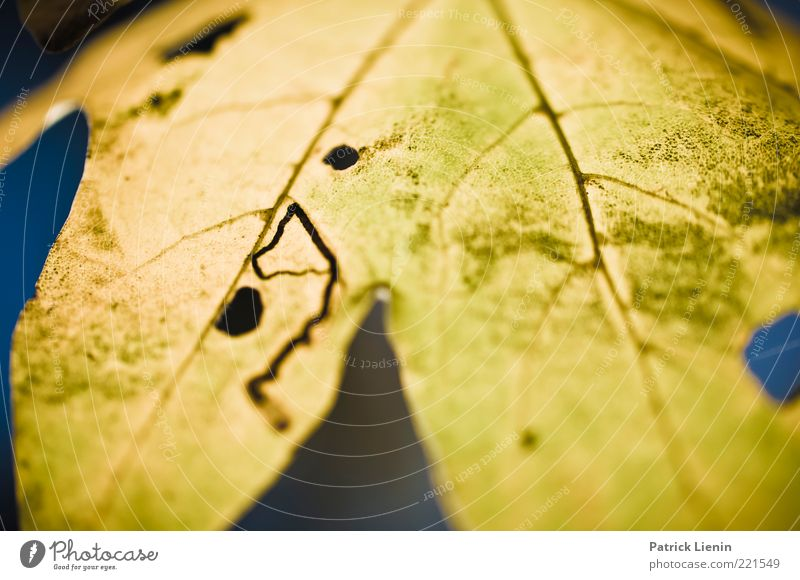 These Days Natur schön alt Pflanze Blatt gelb Herbst Linie Zufriedenheit Stimmung hell Umwelt Fröhlichkeit weich Lebensfreude Freundlichkeit