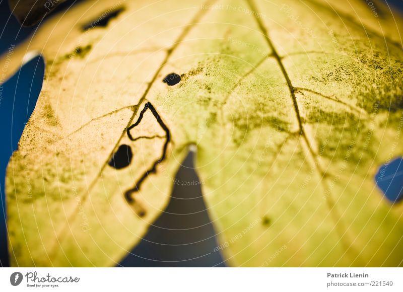 These Days Umwelt Natur Pflanze Urelemente Herbst Blatt Freundlichkeit hell schön trocken weich gelb Stimmung Fröhlichkeit Zufriedenheit Lebensfreude
