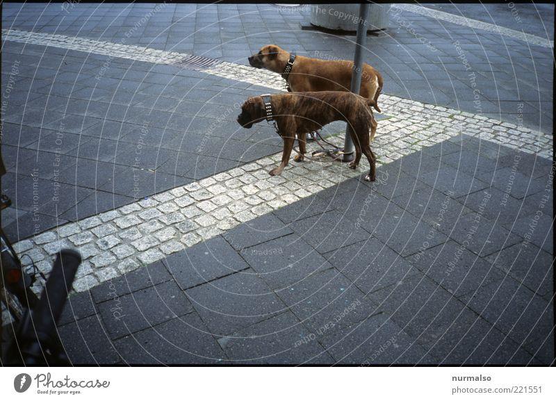 two dogs Stadt Tier Hund Regen Kunst warten Tierpaar Umwelt nass trist Freizeit & Hobby Zeichen trashig Bürgersteig Haustier Schwanz