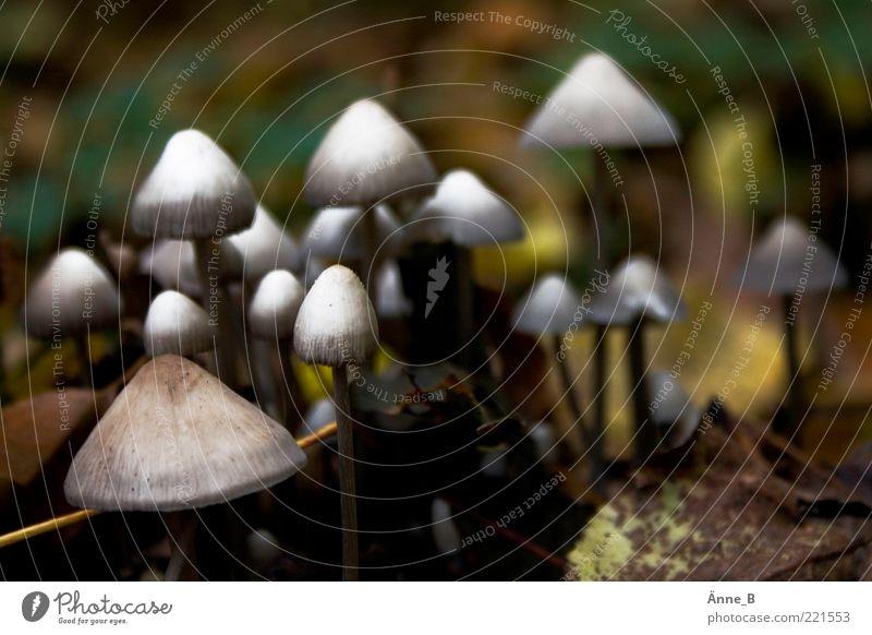Invasion Pilz Umwelt Natur Urelemente Erde Herbst Wachstum ästhetisch klein Spitze braun gelb grün ruhig Pilzhut viele Farbfoto Gedeckte Farben Außenaufnahme