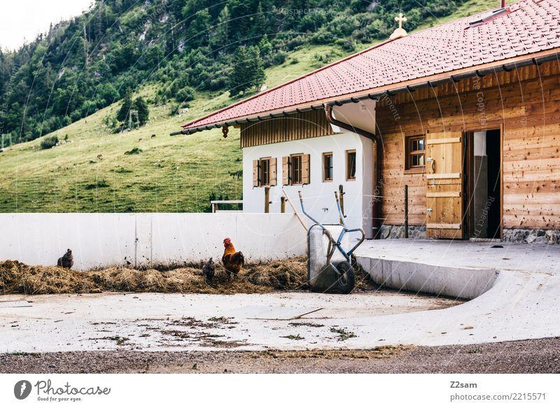 Hahn im ... Berge u. Gebirge Umwelt Natur Alpen Hütte Bauernhof 3 Tier Glück nachhaltig natürlich Zufriedenheit Zusammensein Partnerschaft Erholung