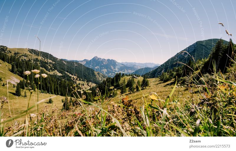 richtung sudelfeld Berge u. Gebirge wandern Umwelt Natur Landschaft Sommer Schönes Wetter Gras Wiese Alpen Gipfel Ferne gigantisch hoch natürlich blau grün