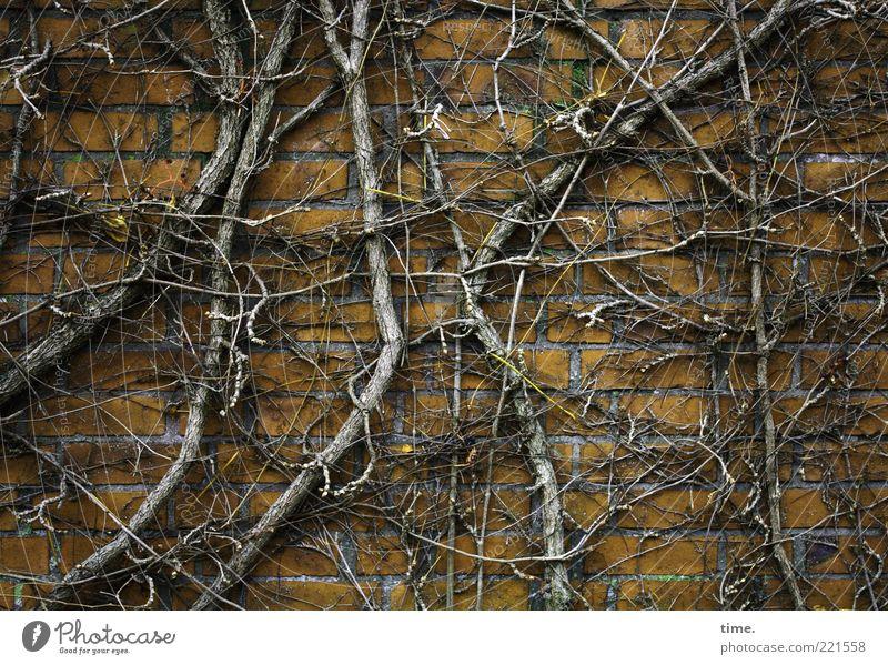 Winterschlaf Umwelt Natur Pflanze Herbst Sträucher Mauer Wand Stein Holz festhalten Wachstum kalt braun gelb chaotisch Wein laublos durcheinander Ranke