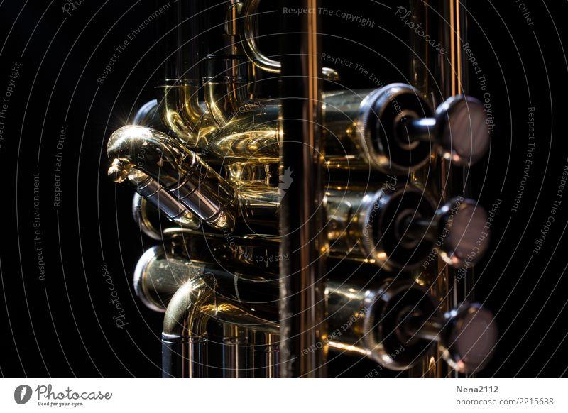 Trompete 05 Kunst Musik Musik hören Konzert Open Air Bühne Oper Band Musiker Orchester Gefühle Stimmung Glück Lebensfreude Begeisterung Tapferkeit Optimismus
