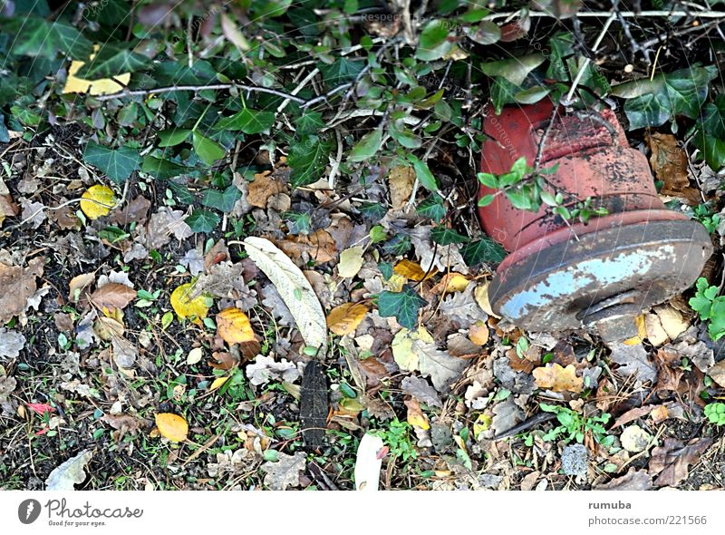 Hydrant Natur Wasser alt grün rot Blatt Herbst Metall Rost Hecke verkehrt Wasserversorgung