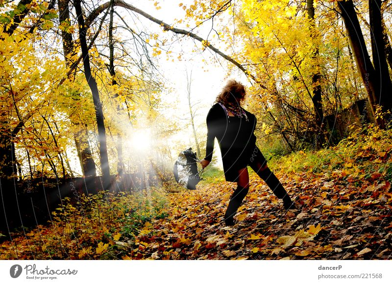 ShoppingPause Frau Mensch Natur Jugendliche Sonne Sommer Erwachsene Wald Herbst feminin Umwelt Landschaft Haare & Frisuren Wege & Pfade Kunst gold