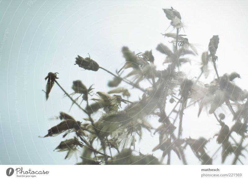 Vision Natur Himmel Sonne blau Pflanze schwarz Leben Erholung Blüte Freiheit Luft hell frei Wachstum Zukunft weich