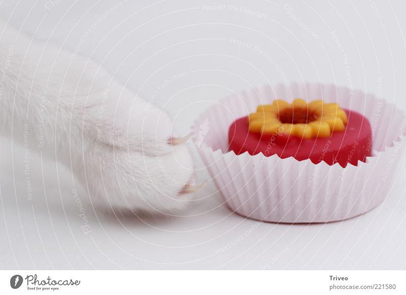 Auf Diät Katze weiß schön rot Tier gelb Bewegung lustig hell rosa gold Lebensmittel elegant ästhetisch süß berühren