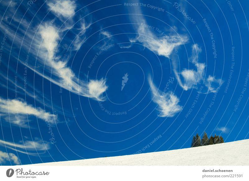 Skifahrerhimmel Winter Schnee Winterurlaub Himmel Wolken Klima Wetter Schönes Wetter Wind Eis Frost blau weiß Farbfoto Außenaufnahme Baum Wolkenhimmel