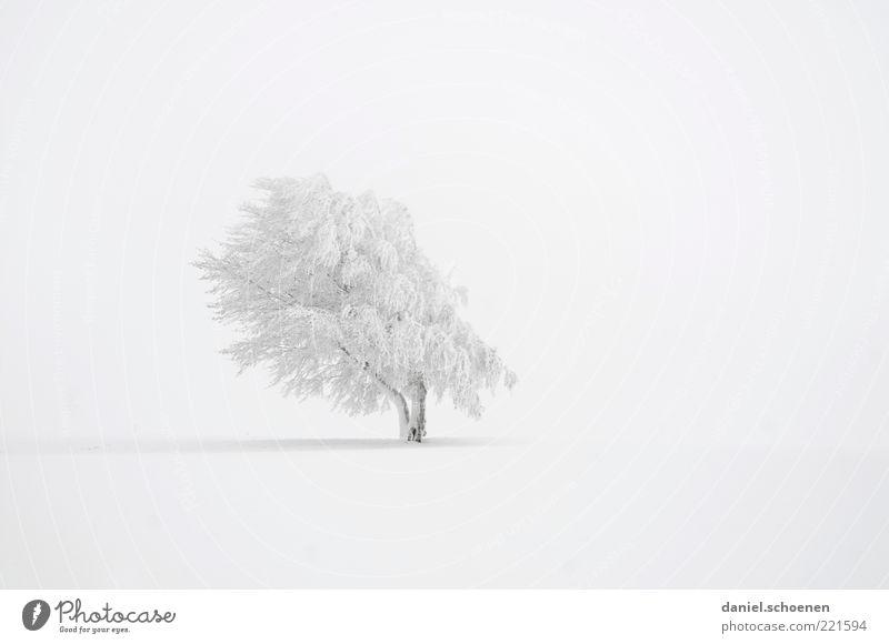 viel weiß, rechts links oben unten Winter Schnee Klima Wetter Wind Eis Frost Baum hell ruhig Buche Gedeckte Farben Menschenleer Textfreiraum links
