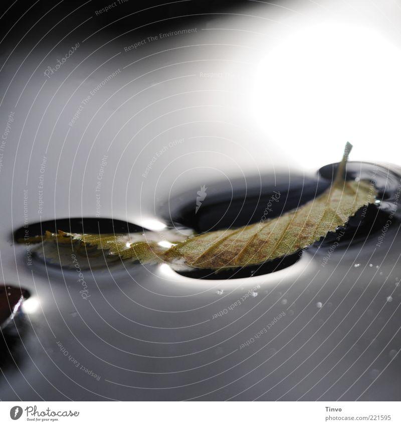 Blatt wird von Wasseroberfläche getragen dunkel Herbst nass Schwimmen & Baden Im Wasser treiben Herbstlaub Reflexion & Spiegelung Oberflächenspannung