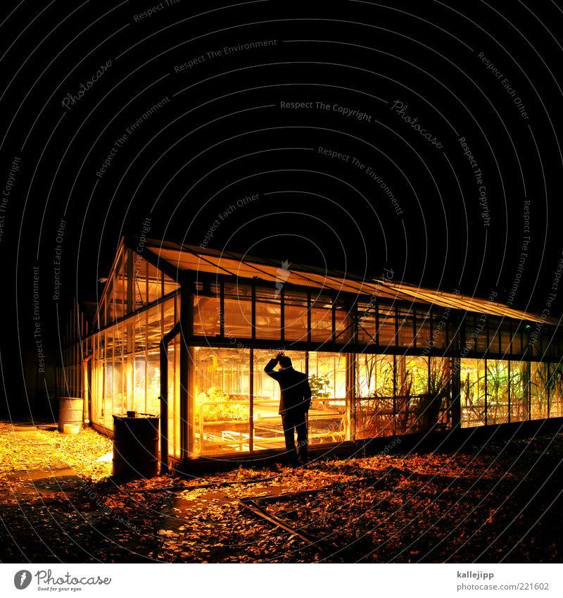 treibhauseffekt Mensch Mann Erwachsene Leben 1 Umwelt Natur Klima Pflanze Grünpflanze Nutzpflanze Garten Haus beobachten Gewächshaus Beet Topf Fass Gärtner