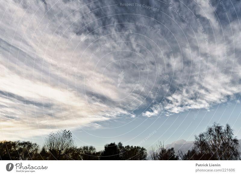 Make my day Natur schön Himmel weiß Baum blau Pflanze Wolken Wald Erholung Herbst oben Landschaft Luft Stimmung Wind