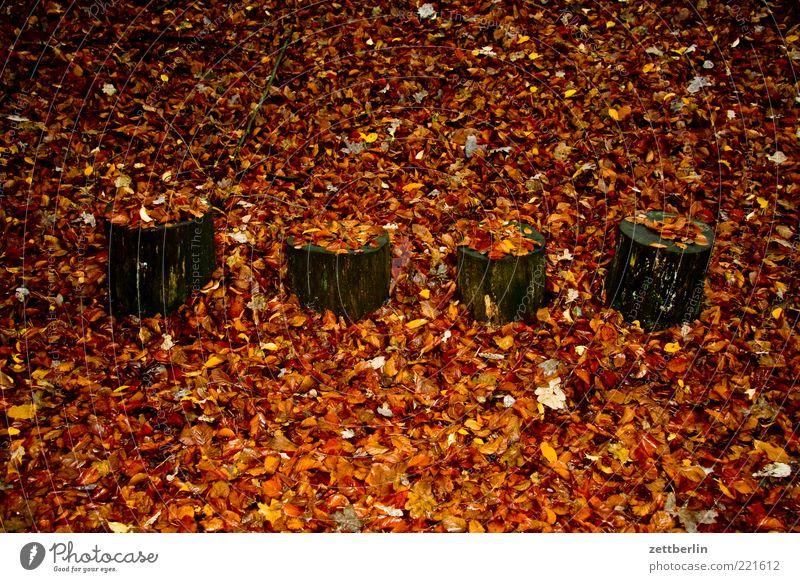 Die fantastischen Vier Natur Baum Blatt Einsamkeit Wald Herbst Holz Wetter Erde Vergänglichkeit Sehnsucht 4 November Herbstlaub bedeckt Waldboden