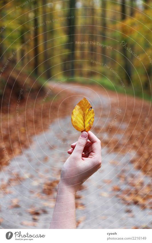 Herbstspaziergang Blatt Wald berühren frei nah natürlich trocken gelb Zufriedenheit Einsamkeit einzigartig Ende erleben Frieden Gelassenheit Leben Leichtigkeit