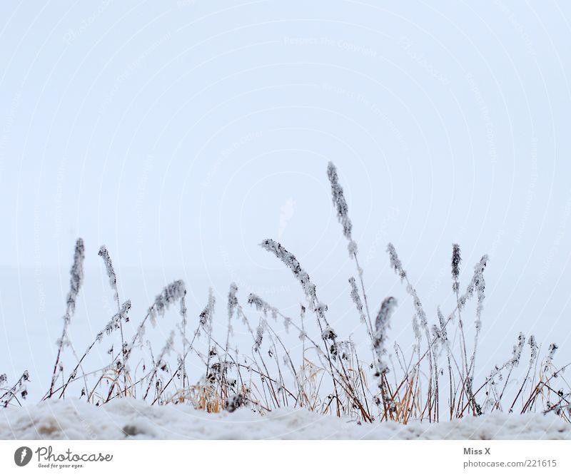 Winter Natur Himmel weiß Winter kalt Gras Eis Frost trist Sträucher gefroren