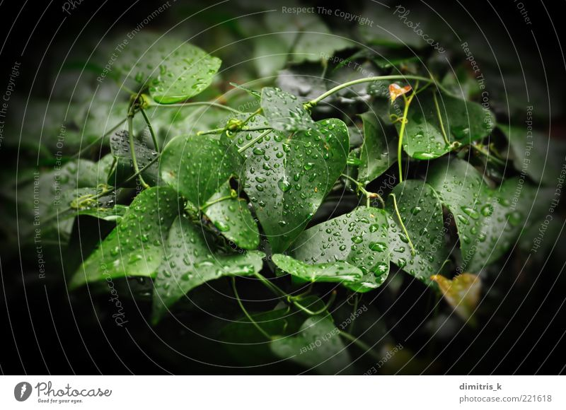 Natur grün Pflanze Blatt Farbe schwarz Umwelt Herbst dunkel Regen Wetter Hintergrundbild nass frisch Wassertropfen Wachstum