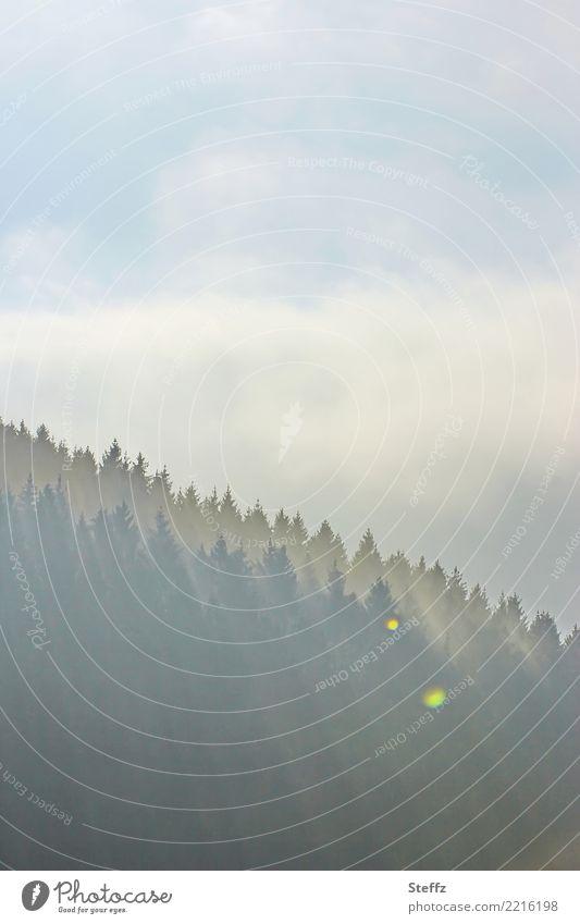 so ein Morgen Umwelt Natur Landschaft Himmel Wolken Sonnenlicht Wetter Schönes Wetter Nebel Nadelbaum Baum Wald Hügel Waldrand Stimmung achtsam Wachsamkeit