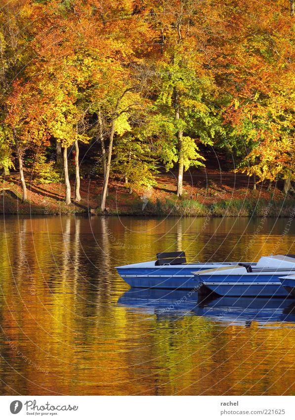 Laß uns tretbootfahren gehen... Natur Wasser blau Herbst See Romantik Wandel & Veränderung Vergänglichkeit Jahreszeiten Seeufer Baumstamm Schönes Wetter Wasserfahrzeug Herbstlaub Im Wasser treiben Pflanze