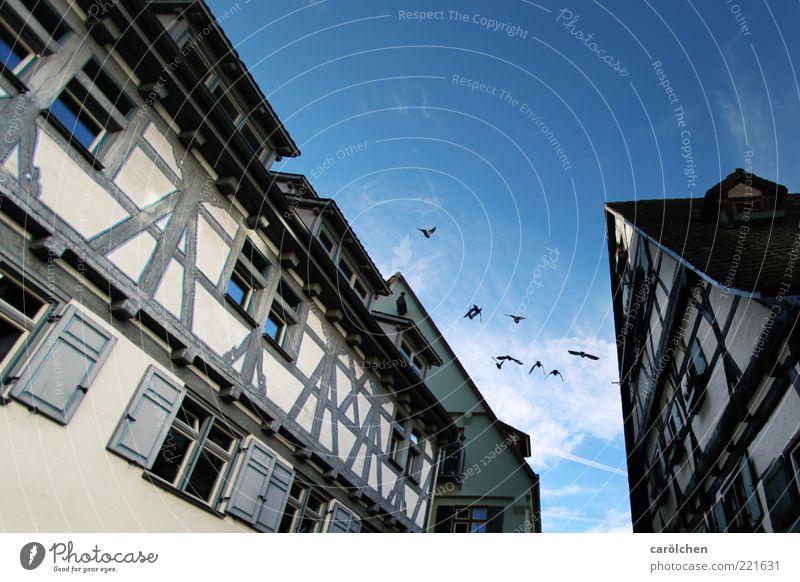 Altstadt (LT Ulm 14.11.10) Dorf Kleinstadt Stadt Menschenleer Gebäude blau weiß Dach Fachwerkfassade Fachwerkhaus Vogel Farbfoto Textfreiraum oben Tag