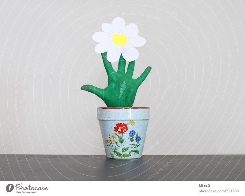 Mehr als ein grüner Daumen grün Pflanze Blume Blatt lustig Blüte außergewöhnlich Wachstum Dekoration & Verzierung Finger Kreativität Blühend skurril positiv Blumentopf Handschuhe