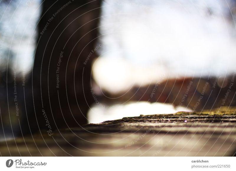 Mauerschleicher (LT Ulm 14.11.10) Menschenleer braun Unschärfe Flussufer Schwache Tiefenschärfe Farbfoto Gedeckte Farben Detailaufnahme Baumstamm Textfreiraum