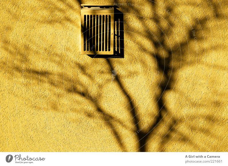 shadow on the wall - LT Ulm 14.11. Wand Lüftung Gitter leuchten gelb grau schwarz Silhouette Ast Baum Farbfoto mehrfarbig Außenaufnahme Menschenleer