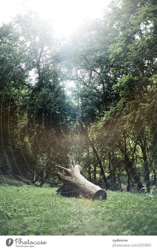 Vergessen Natur Baum Blatt ruhig Wald Wiese Leben Umwelt Zeit ästhetisch Wandel & Veränderung einzigartig Vergänglichkeit Ende geheimnisvoll entdecken