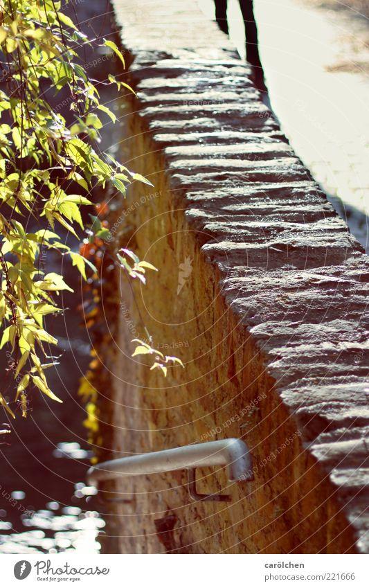 an der Mauer auf der Lauer (LT Ulm 14.11.10) grün Blatt gelb Wand grau gold Brücke Sträucher Geländer Textfreiraum Zweige u. Äste