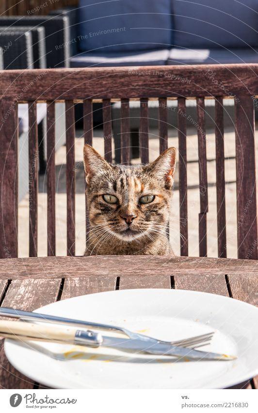Eatin´ Pussy Katze Sommer Tier Essen Garten Lebensmittel Ernährung warten trinken Dorf Haustier Restaurant Bioprodukte Geschirr Appetit & Hunger Teller