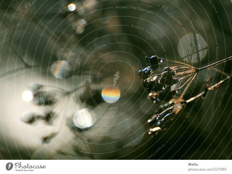 Im Herbst Natur Pflanze Stimmung glänzend Umwelt Wassertropfen Kreis rund natürlich Stengel Halm verblüht Lichtbrechung Zweige u. Äste Blendenfleck dehydrieren