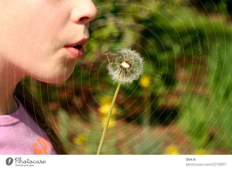 Zahnloser Löwe Kind Mensch Natur Pflanze Sommer Blume Freude Mädchen Frühling feminin Spielen Kindheit Mund 8-13 Jahre Lippen Löwenzahn