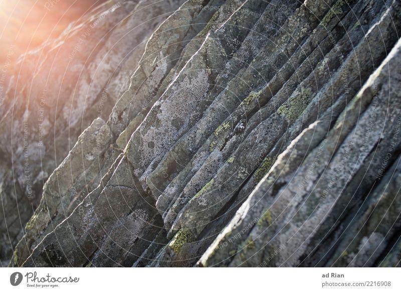 Rock n' Roll Klettern Kletterwand Umwelt Natur Herbst Moos Felsen Blühend glänzend leuchten alt trist trocken Farbfoto Außenaufnahme Textfreiraum rechts Tag