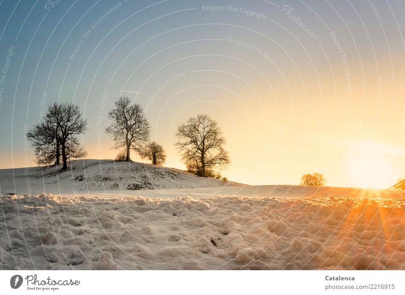Die letzten Sonnenstrahlen Natur Landschaft Wolkenloser Himmel Horizont Sonnenaufgang Sonnenuntergang Winter Schönes Wetter Schnee Baum Wiese Hügel glänzend