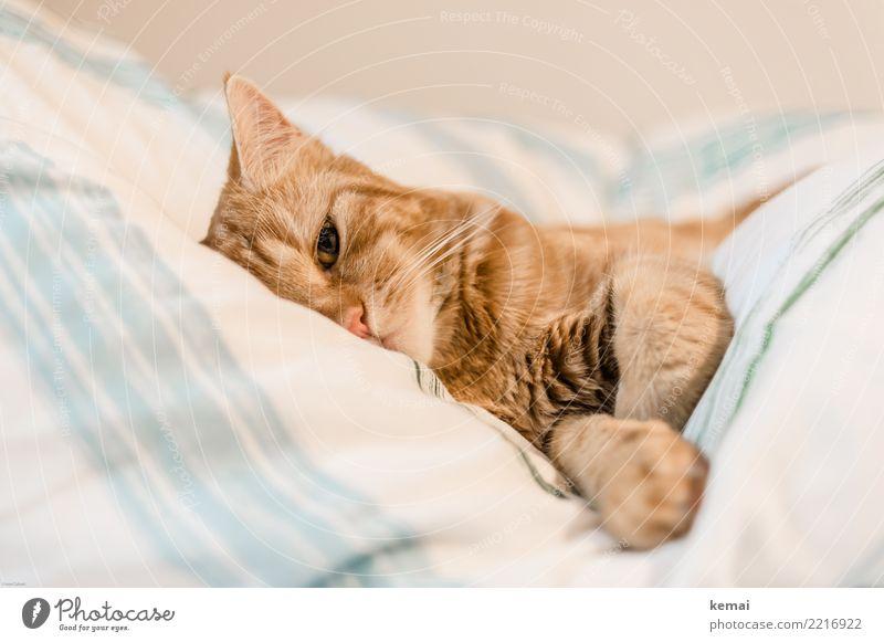 Beobachtung Lifestyle harmonisch Wohlgefühl Zufriedenheit Erholung ruhig Freizeit & Hobby Häusliches Leben Wohnung Bett Schlafzimmer Bettdecke Haustier Katze