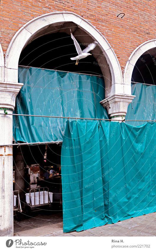 Freiheit II Rialto Venedig Altstadt Menschenleer Taube 1 Tier fliegen blau rot Markt Flucht flüchten Farbfoto Textfreiraum rechts Vorhang entkommen Vogel Altbau